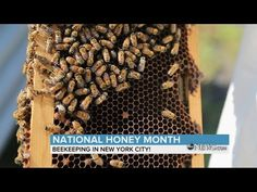 New post on Getmybuzzup TV- Beekeeping in New York City | ABC News- http://wp.me/p7uYSk-uZS- Please Share