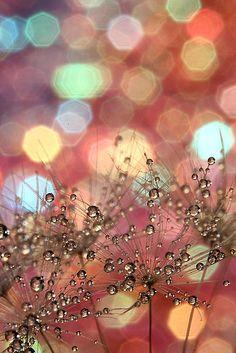 Sparkle Party by Amy De
