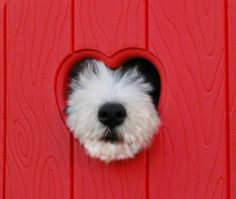 ❤️Heart with a furry face...