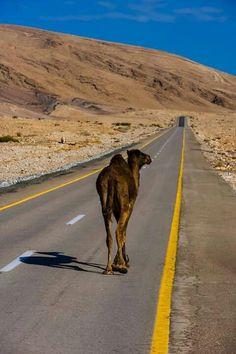Estado del tráfico en el desierto del Néguev ;)