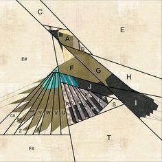 Shape Moth: Eurasian Jay {Forest QAL}
