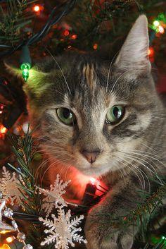 Sweet Christmas kitty
