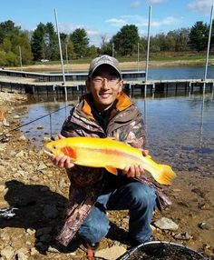 golden-palomino-trout-500x607.jpg (500×607)
