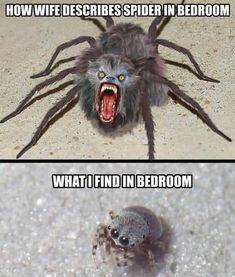Funniest Animal Memes Of The Day That Are Extremely Hilarious Pics) – Awed! … Funniest Animal Memes Of The Day That Are Extremely Hilarious Pics) – Awed! Crazy Funny Memes, Really Funny Memes, Funny Love, Stupid Memes, Funny Relatable Memes, Haha Funny, Funny Quotes, Lol, Funny Spider Memes