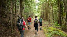 Randonnée :Bien qu'il puisse sembler évident qu'une bonne randonnée à travers une forêt ou une montagne peut purifier votre esprit, le corps et