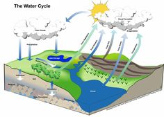 The water cycle refers to the movement of water between different parts of the Earth's environment, including the atmosphere, natural reservoirs such as oceans and lakes, and the soil and rock formations making up the Earth's land surfaces.