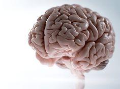 sinapsis: ¿sabes como se conectan tus neuronas?