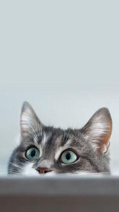 Cat Wallpaper Phone Hd