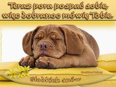 Cute Cats And Dogs, Good Night Quotes, Labrador Retriever, Pitbulls, Dog Cat, Teddy Bear, Clip Art, Puppies, Humor