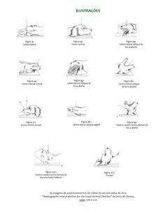Tabela de Exames e Posicionamentos Radiográficos para Pequenos Animais - Provet Math, Veterinary Medicine, Radiology, Tables, Animales, Math Resources, Early Math, Mathematics