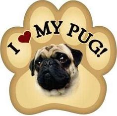 Love when I find merchandise with a black pug on it. Puppy Shot Schedule, Animals And Pets, Baby Animals, Carlin, Black Pug, Pug Puppies, Pug Love, Dogs Of The World, Dog Quotes