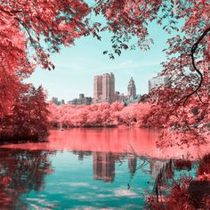 New York-based, Italian born photographer and graphic designer Paolo Pettigiani has recently captured a surprising collection of pictures of Central Park's landscape, in a series named Infrared NYC. Infrared Photography, City Photography, Amazing Photography, Nature Photography, Photography Series, Landscape Photography, Nyc, Trippy Photos, Art Director