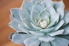 Pear Diamond Engagement Ring in a Succulent // Photography ~ @shannonduggan