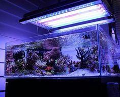 red sea peninsula 500 reef tank aquascapes custom built. Black Bedroom Furniture Sets. Home Design Ideas