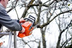 At Alex Tree and Garden Services, tree pruning and trimming services in Sydney are undertaken at the highest level and carried out by a qualified arborist. It is important to make sure your tree is pruned at a young age and make strategic cuts in order to get the tree to grow in the direction and fashion that you want it to, and we have the qualified staff that can do that.