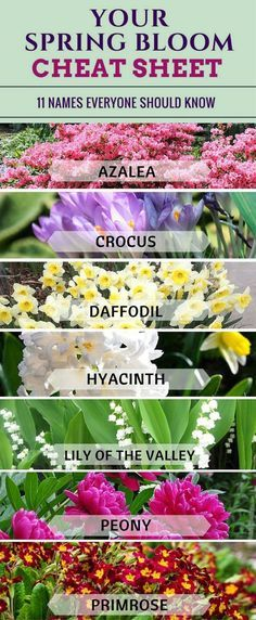 Bloom time chart for spring and summer bulbs gardens bulbs and yards 15 clever tips for taking care of your flower garden mightylinksfo