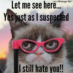 Grumpy cat still hates you