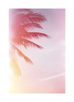 palm trees and afternoon skies