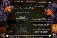 Stirling Bridge Kennel: Kiskutyáink megszülettek!