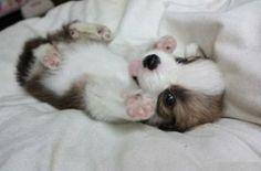 Rub my belly please!