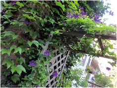Plant Climbing Clematis to grow up the arbor. A great together project for the 8th Anniversary.
