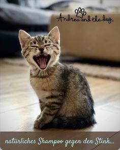 Dieses ganz natürliche Shampoo neutralisiert dies fiesen Gerüche, wenn sich dein Liebling mal in nicht so gut riechenden Dinge gewälzt hat.   Ohne Chemie, ohne Alkohol und Parfüm, ganz natürlich.   #katzenliebe #andreaandthedog #katzenpflege #naturprodukte #chemiefrei #handmade #steiermark #naturproduktefürkatzen #naturpur #forcats #catlove #schampoo #stinkekatze #smelly Cat Facts, Cat Gif, Cat Toys, I Love Cats, Cats Of Instagram, Instagram Beach, Animals And Pets, Cats And Kittens, Cat Lovers