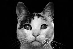 #The cat from darkness  Like,Repin,Share, Thanks!