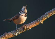Welcher Vogel ist das? Vogelstimmen erkennen!   Duda.news Cute Birds, Pretty Birds, Small Birds, Beautiful Birds, Bird Tree, Kew Gardens, Wild Hearts, Bird Watching, Bird Feathers