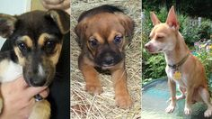 Looking for a best pal? Check out these 10 pups available for adoption