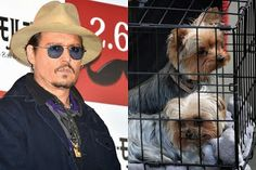 BG_Johnny+Depp+cani.jpg (320×213)