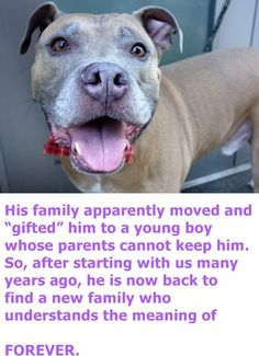 SAFE 8-19-2015 by Pound Hounds Res-Q --- Manhattan Center NAS – A0798043 ***RETURNED 08/05/15*** MALE, BROWN / WHITE, AM PIT BULL TER MIX, 7 yrs OWNER SUR – EVALUATE, HOLD FOR ID Reason HOME SIZE Intake condition EXAM REQ Intake Date 08/05/2015 http://nycdogs.urgentpodr.org/nas-a0798043/