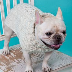 French Bulldog, modeling a Cabled Dog Sweater Knitting Pattern Knitted Dog Sweater Pattern, Knit Dog Sweater, Dog Pattern, Free Pattern, Cable Sweater, Pet Sweaters, Small Dog Sweaters, Knitting Patterns For Dogs, Knitting Projects