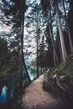 Imagen de nature, tree, and forest Camping & Hiking - http://amzn.to/2iquzg5