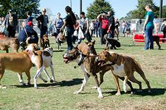 Check out the article from Unleash Magazine for Music Festival Boxer Rescue, Celebrity Dogs, Dog Runs, Family Events, Dog Owners, Live Music, Small Dogs, Magazine, Check