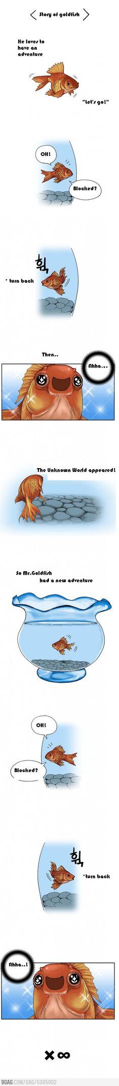 Mr. Goldfish is always happy