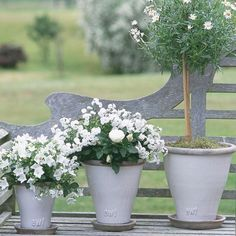 Potted pleasures--white plants against aged wood. Pretty. Miniature white roses and marguerites.