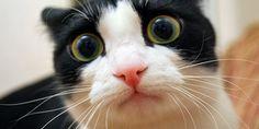 my_frightened_cat_by_nema1n-d36kmny