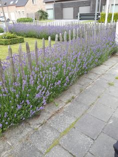 Afsluiting vooraan tuin Woods, Sidewalk, Garden, Outdoor, Terrace, Gardens, Garten, Outdoors, Forests