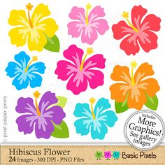 Hibiscus clipart Hibiscus flower Clip art commercial use