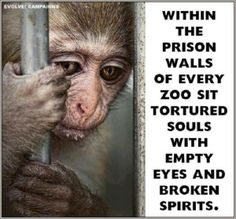 PLEASE....boycott zoos and circuses!!  The torture and abuse won't stop...until you do.