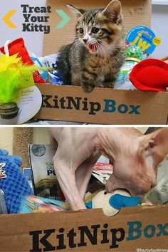 Order a box of goodies for your cat today at —> https://www.kitnipbox.com/?utm_source=pinterest&utm_medium=cpc&utm_content=smile_skin-2im-text&utm_campaign=smile_skin-USUK-IOSDT and treat your kitty to toys, treats, and other wholesome products. Your purchase will also help us support #cats in need!