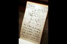 "Revolutionary Thinking Darwin jotted down many of his ideas and observations in a series of notebooks. He drew this ""tree of life"" in July 1837 to illustrate his concept of descent with modification — how one species could evolve into many — but did not formalize his theory for another 20 years."
