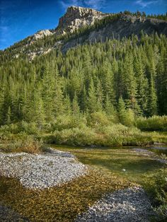 Canyon Creek, Pioneer Mountains, Montana