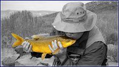 Nick kissing his first Yellowfish Kissing Him, Fly Fishing, Fly Tying, Camping Tips