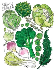 Image from http://img.wonderhowto.com/img/04/97/63544307549088/0/cook-broccoli-kale-other-brassicas-so-they-actually-taste-good.w654.jpg.