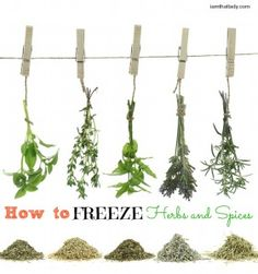 how to freeze herbs and spices. If you have too many fresh herbs and can't use them fast enough, you can put them in ice cub trays with broth and freeze them for stocks, soups, or other delicious meals.