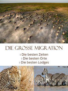Wann und wo Sie die spektakuläre Tierwanderung durch die Serengeti am besten beobachten können, verrät Ihnen unsere Monatsübersicht zur Großen Migration.