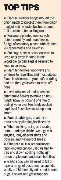 """Garden Tips - """"Baking soda neutralizes the ph in the soil and nothing will grow there. use baking soda around all of the edges of flower beds to keep th... #controlpestsingarden #OrganicGardeningTips"""