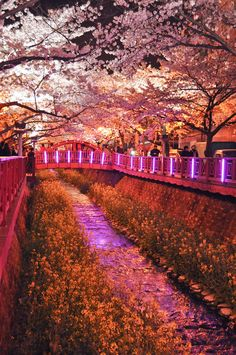 light and flowers // cherry blossoms in japan