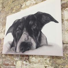 Dog sketch canvas